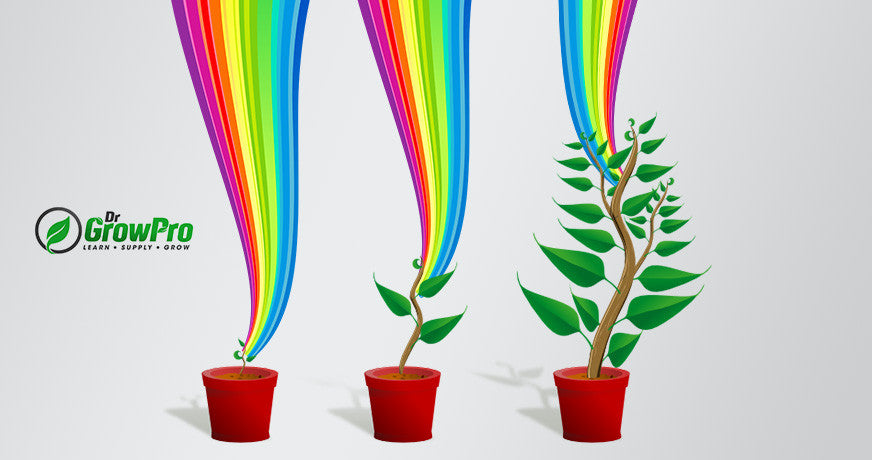How Light Spectrum Affects Plant Growth