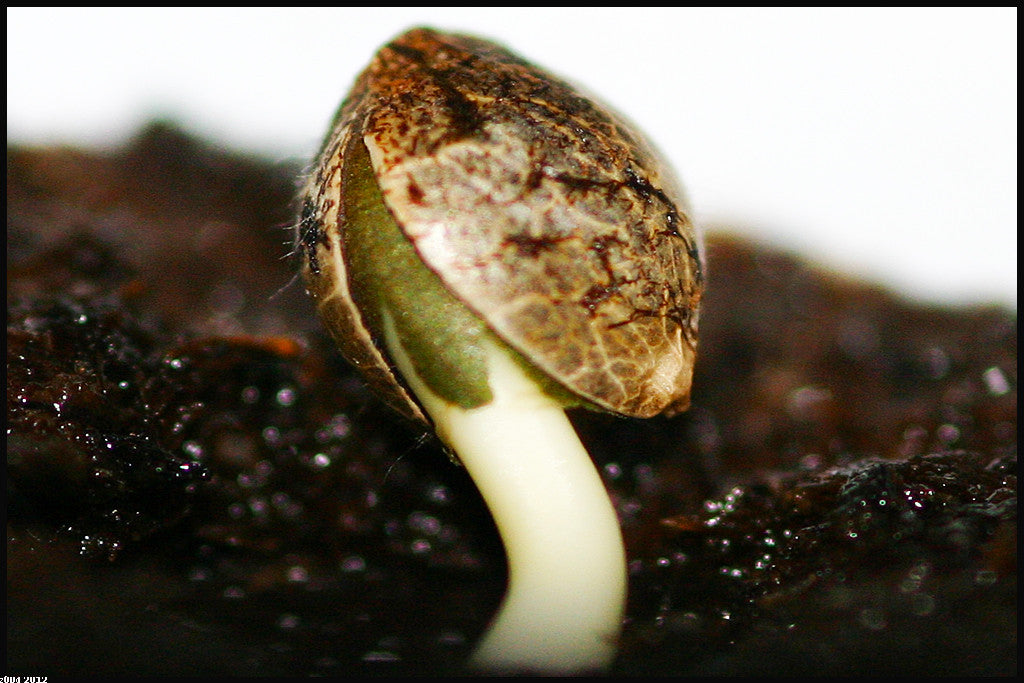 5 Reasons Your Seeds Just Aren't Sprouting