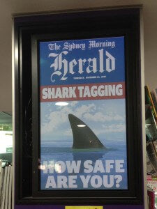 Shark Tagging Safety