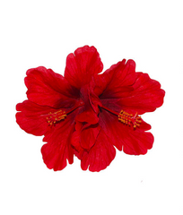 Double Hibiscus Hair Flower in Red