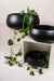 THE ARCHIVE - Light Fiberstone Mushroom Bowl (Matt Black)