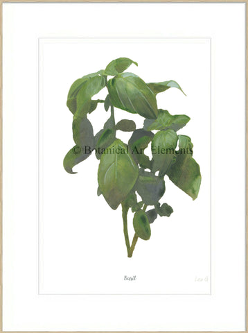 Basil : Signed, Mounted Print