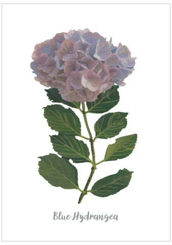 Blue Hydrangea : Pack of 10 Postcards