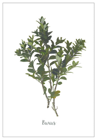 Buxus : Pack of 10 Cards