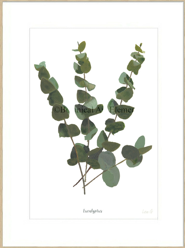 Eucalyptus : Signed, Mounted Print