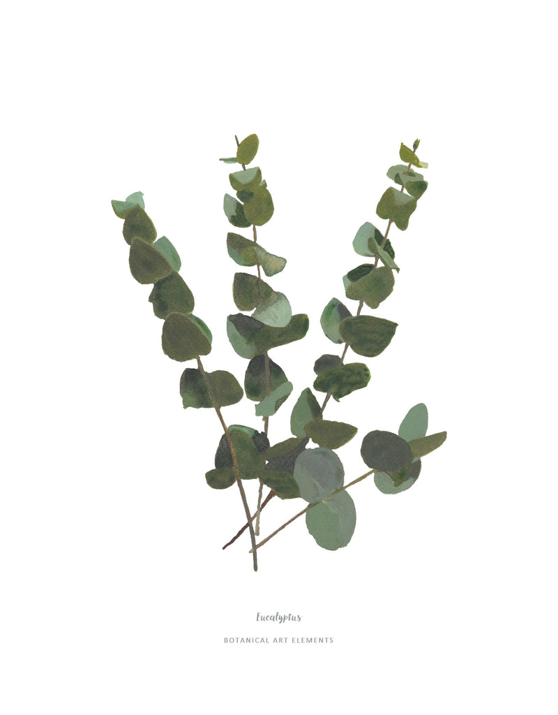 Image result for eucalyptus