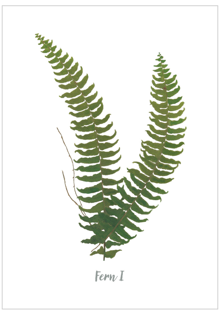 Fern I : Pack of 10 Postcards