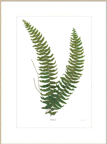 Fern I : Signed, Mounted Print