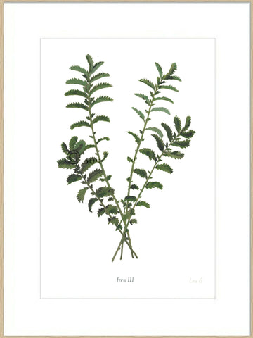 Fern III : Signed, Mounted Print