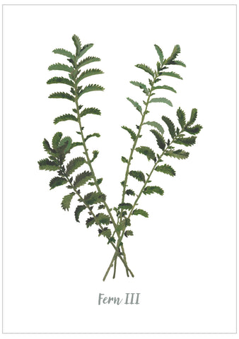 Fern III : Pack of 10 Cards
