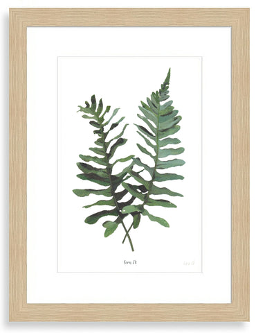 Fern IV : Signed, Mounted Print