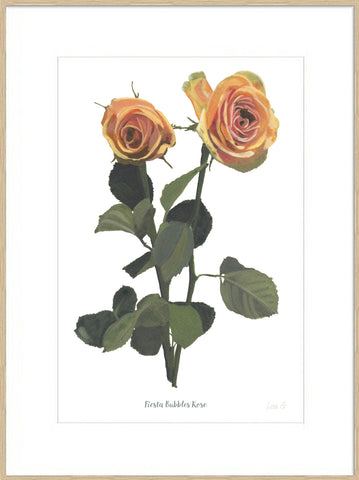 Fiesta Bubbles Rose : Signed, Mounted Print