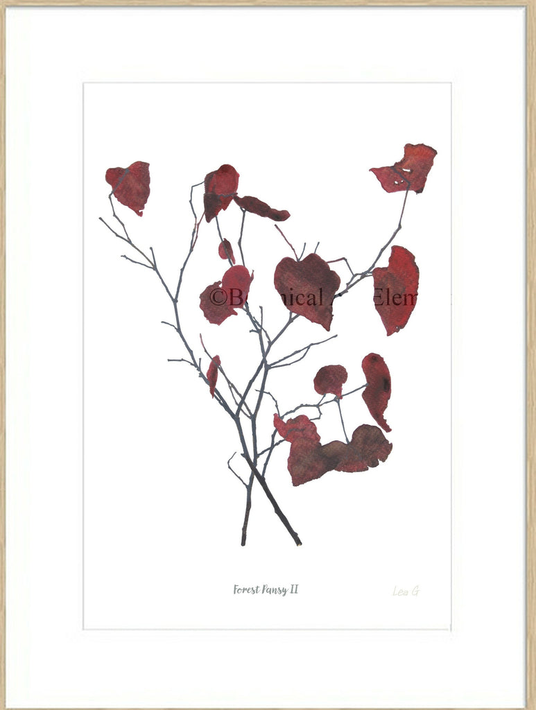 Forest Pansy II : Signed, Mounted Print