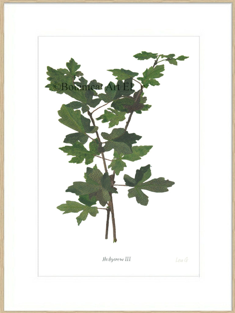 Hedgerow III : Signed, Mounted Print