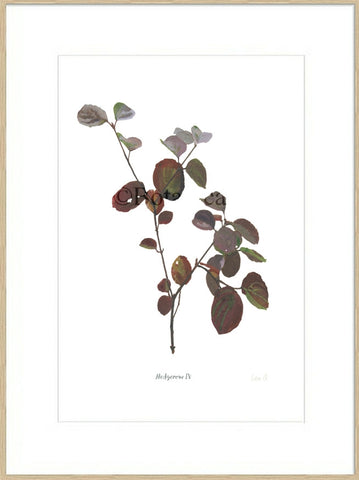 Hedgerow IV : Signed, Mounted Print