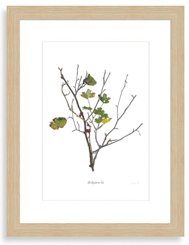 Hedgerow VI : Signed, Mounted Print