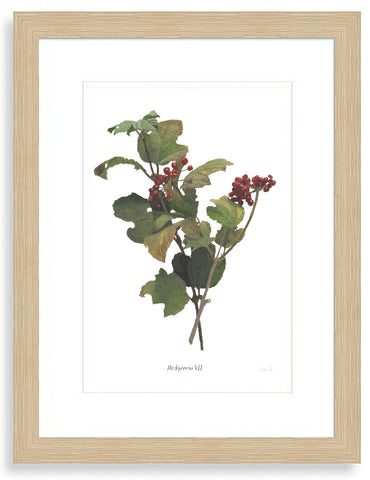Hedgerow VII : Signed, Mounted Print