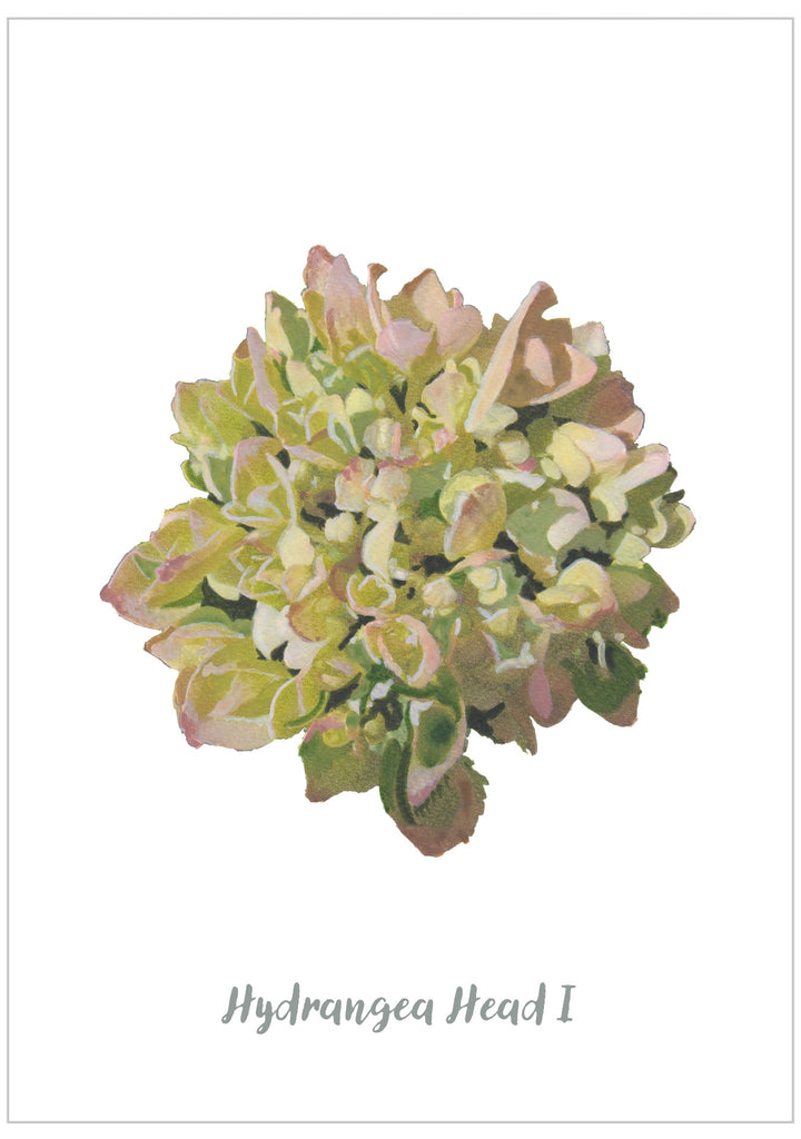 Hydrangea Head I : Pack of 10 Postcards