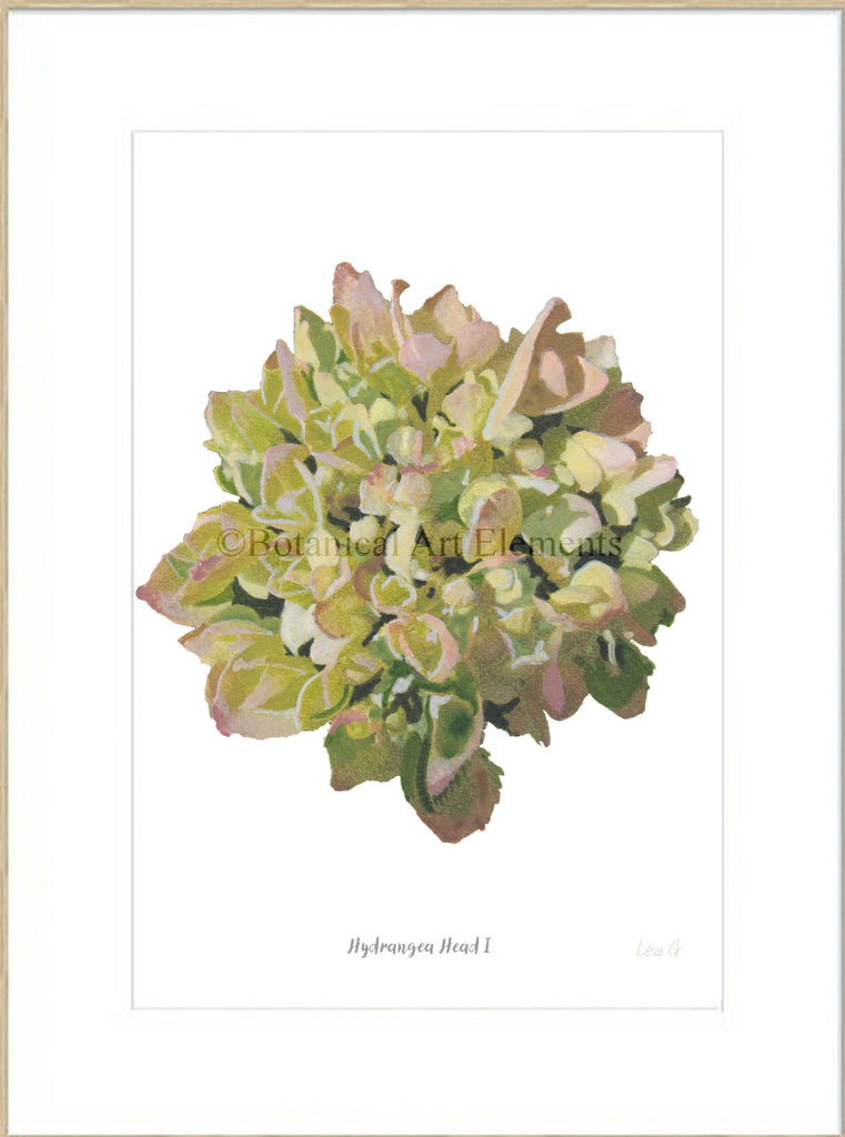 Hydrangea Head I : Signed, Mounted Print