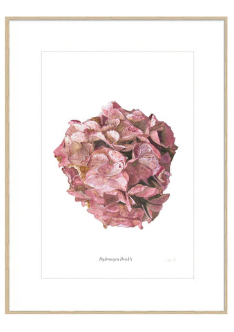 Hydrangea Head V : Signed, Mounted Print