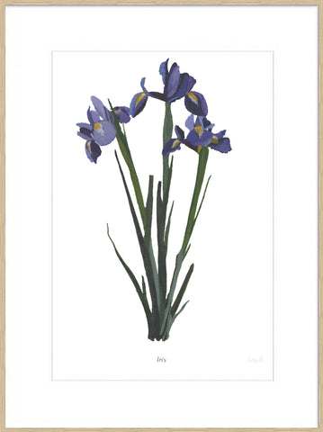 Iris : Signed, Mounted Print