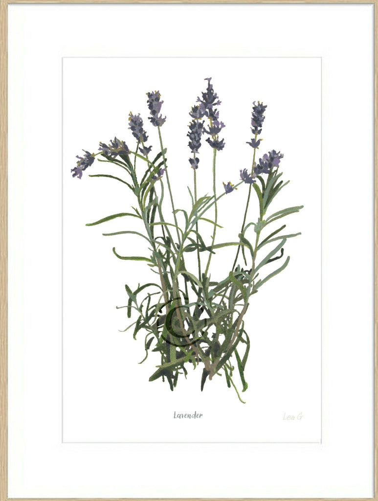Lavender : Signed, Mounted Print
