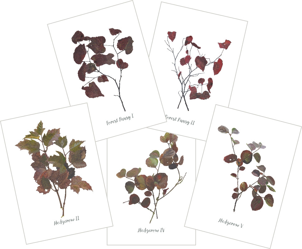 Mixed Autumn : Pack of 10 Cards