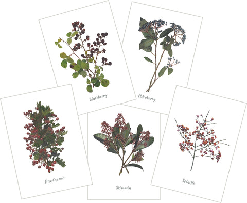 Mixed Berries : Pack of 10 Cards