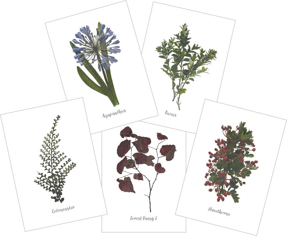 Mixed Garden : Pack of 10 Cards