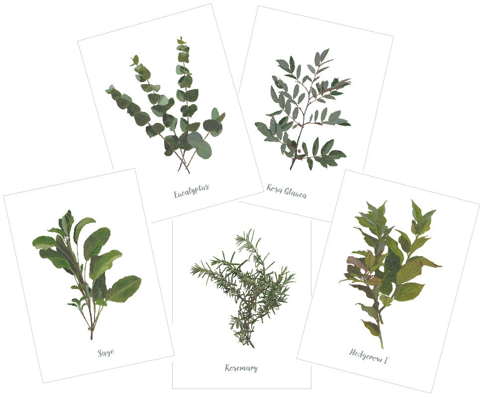 Mixed Greens : Pack of 10 Cards