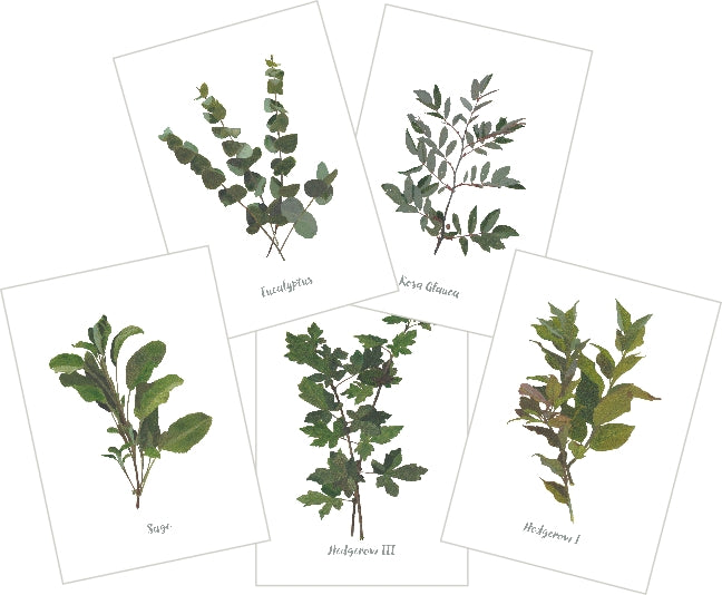 Mixed Greens I : Pack of 10 Cards