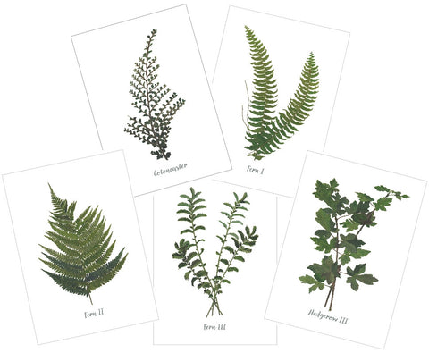 Mixed Hedgerow : Pack of 10 Cards