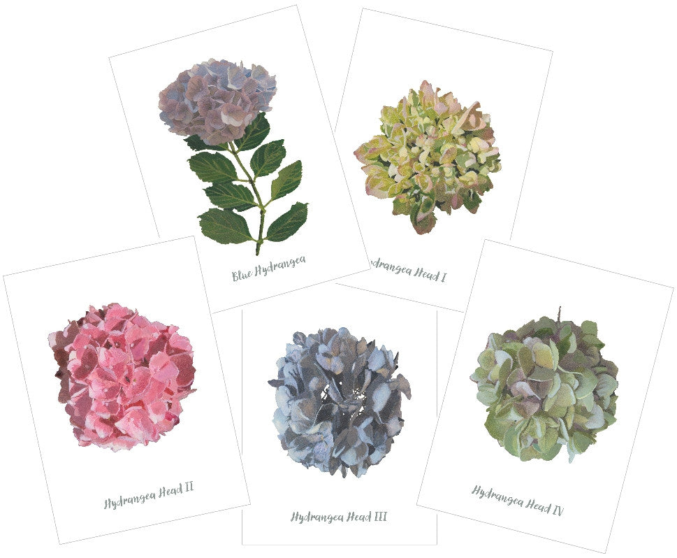 Mixed Hydrangeas : Pack of 10 Cards