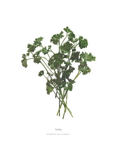 Parsley :  Poster Print