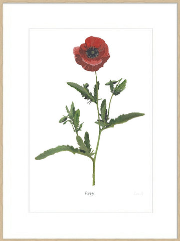 Poppy : Signed, Mounted Print