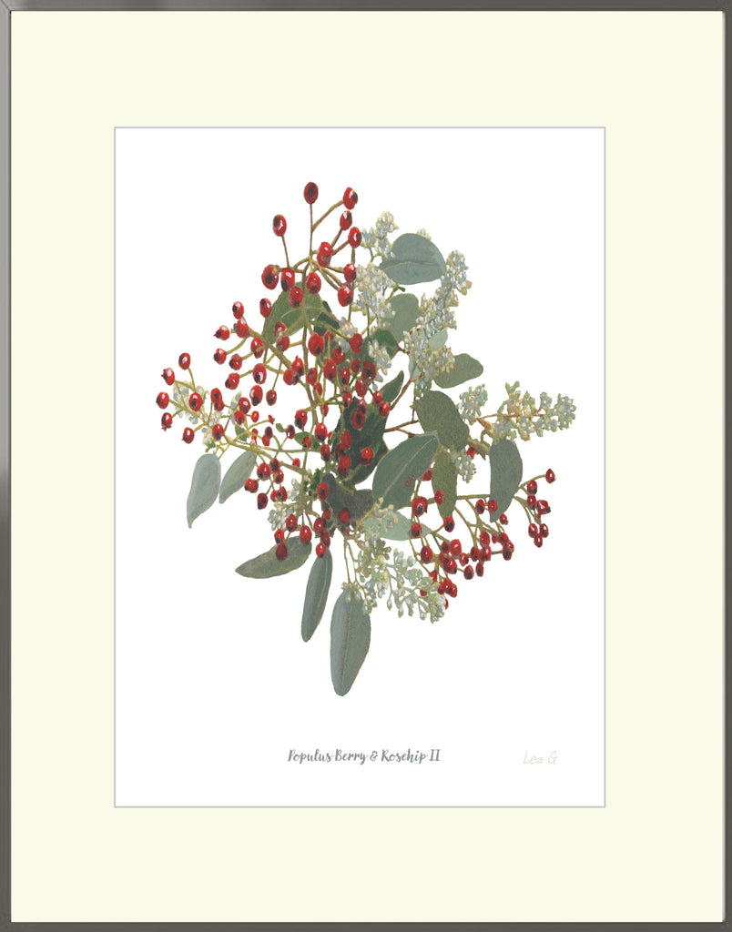 Signed, Mounted Print : Populus Berry & Rosehip II