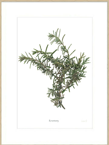 Rosemary : Signed, Mounted Print