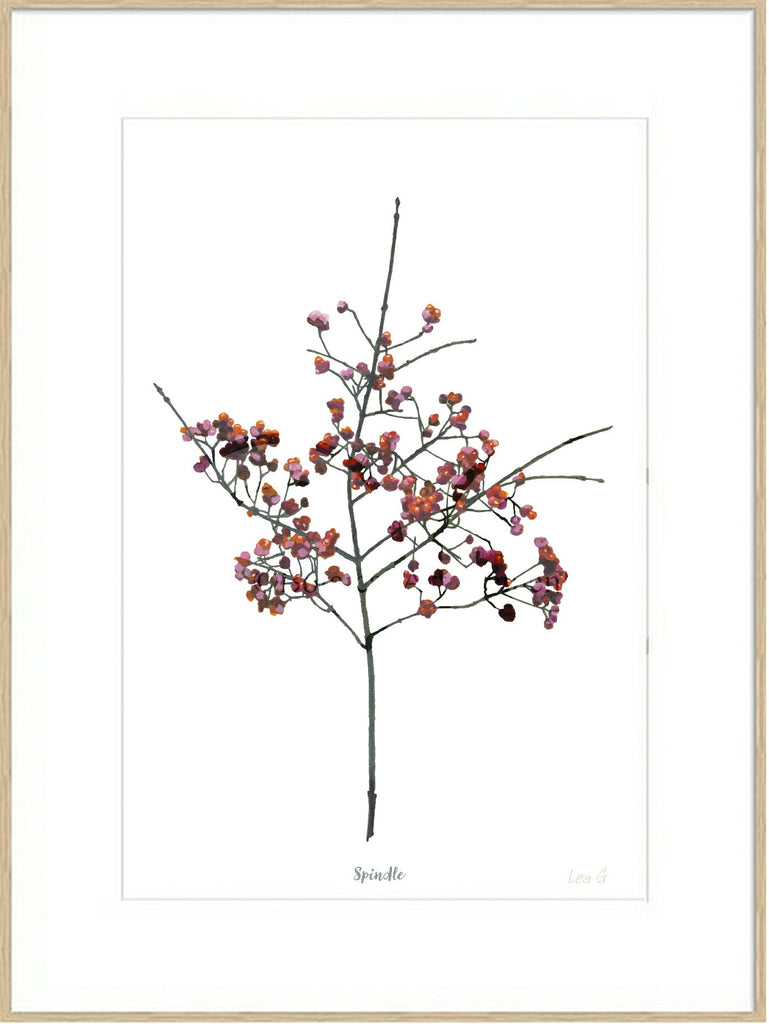 Spindle : Signed, Mounted Print
