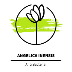 Angelica_Inensis