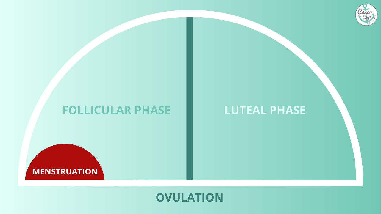 follicular phase graph