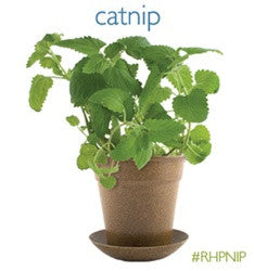 Organic Cat Nip - catnip attracts 80% of all cats