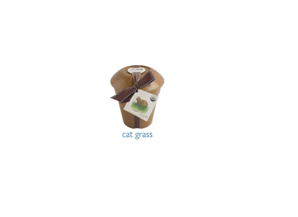 Organic Cat Grass - (Wheat Grass Triticum aestivum)