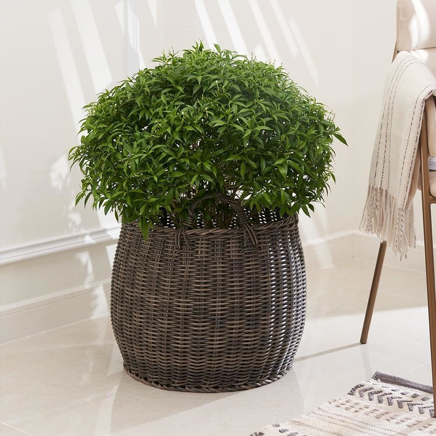 Resin Round Plant Pot and Laundry Basket with Handles