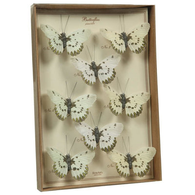 8 Butterfly Specimen Box Accent Decor, White and Brown By Casagear Home