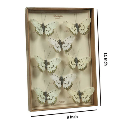 8 Butterfly Specimen Box Accent Decor White and Brown By Casagear Home BM229349