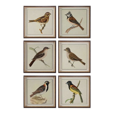 Spring Soldiers Bird Prints, Set 6 By Uttermost