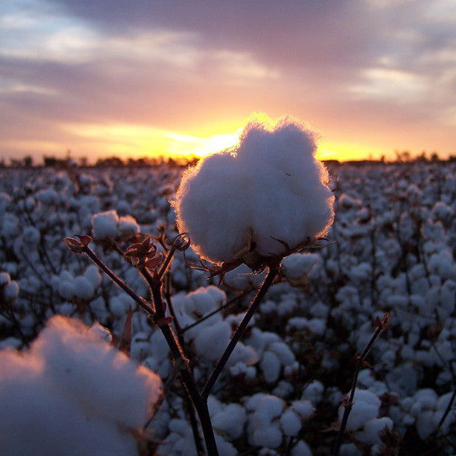 Sustainable Fashion | The Australian Cotton Industry