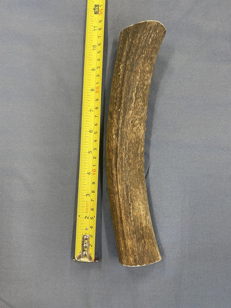 XXL Solid Elk Antler Dog Chew (for the largest breeds or hardest chewers) - Rocky Mountain Antler Works