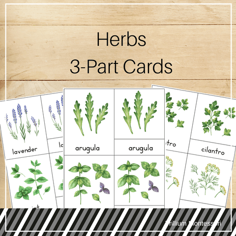Herbs 3-Part Cards