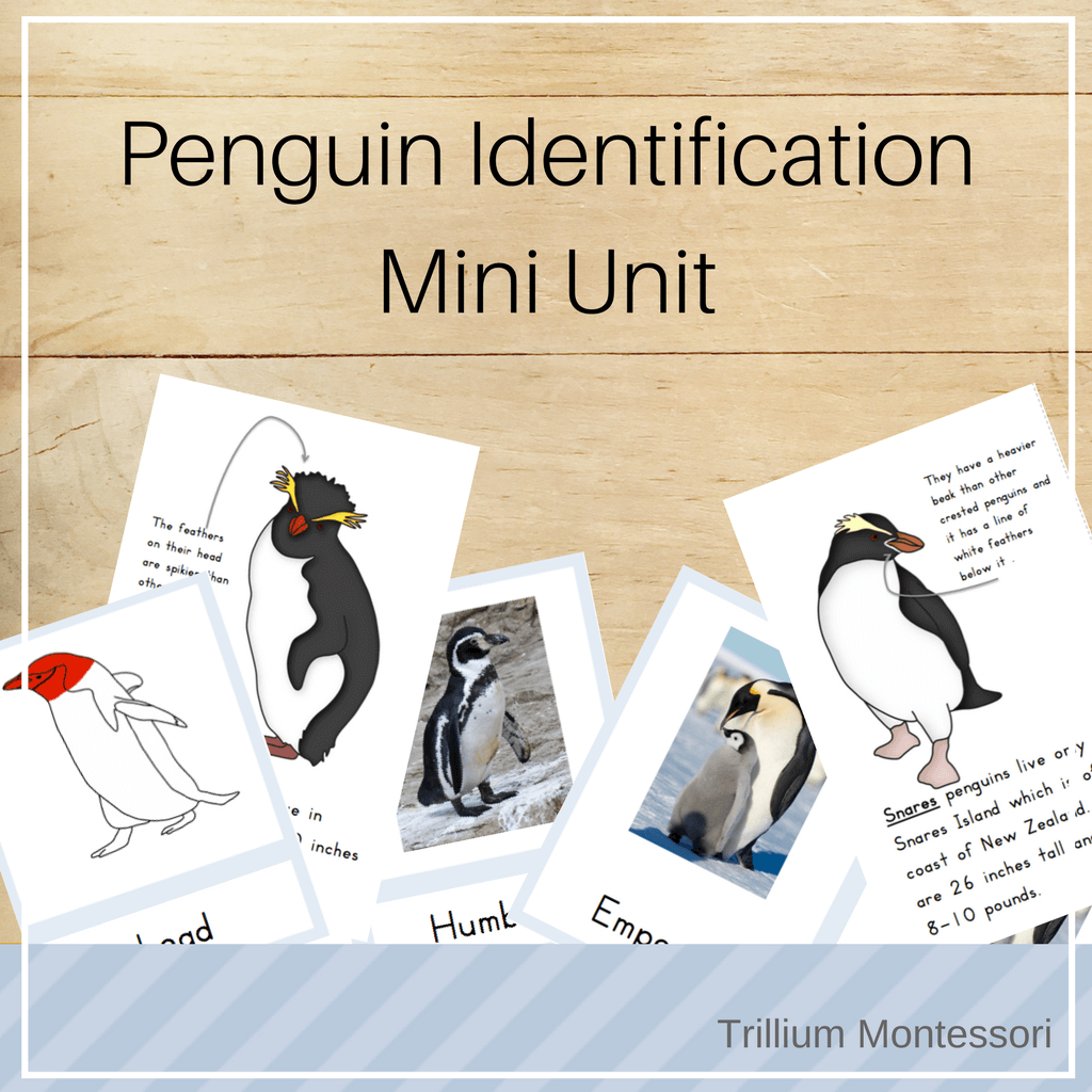 Penguin Identification Mini Unit - Trillium Montessori